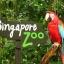 Singapore Zoo + Tram Ride (เด็ก) thumbnail 1