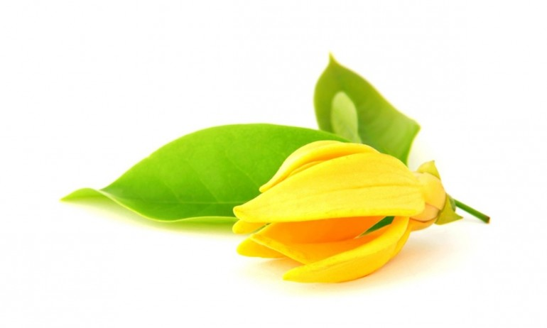 หัวน้ำหอมกลิ่น ดอกกะดังงา YLANG YLANG -PC0012