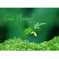 หัวน้ำหอมกลิ่นdouble fresh morning : 002447