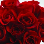 หัวน้ำหอม กลิ่น Oriental rose -PC0088 450 ml.
