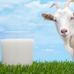 Goat Milk Fragrance นมแพะ (1 kg)