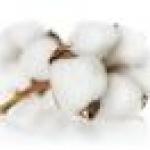 น้ำหอม Cotton Flower 450 ml.