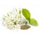 White Jasmine Mint fragrance 450 ml.