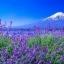 หัวน้ำหอม Lavender : 002388 thumbnail 1