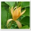 หัวน้ำหอม กลิ่น จำปา thumbnail 1